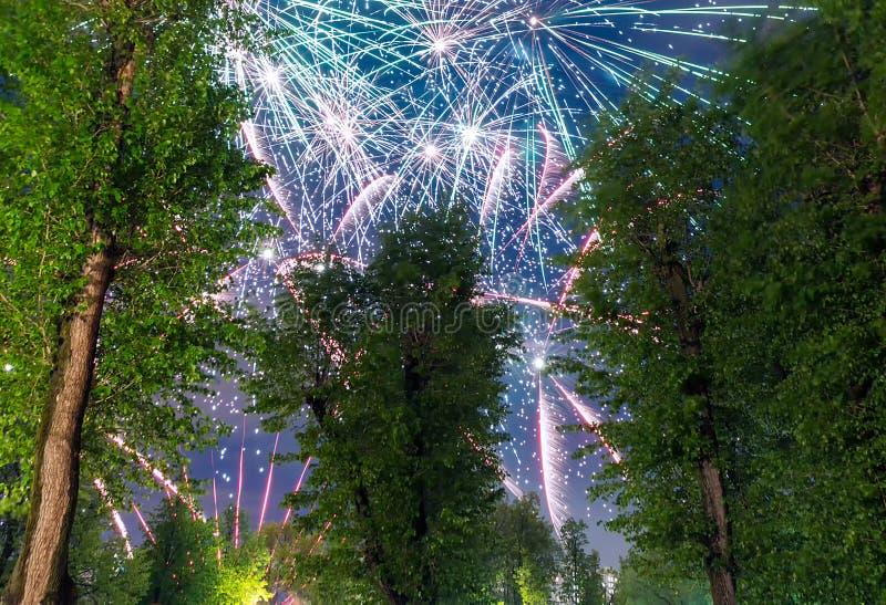 Kleurrijk Vuurwerk dat achter bomen exploderen royalty-vrije stock afbeeldingen