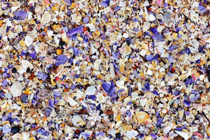 Kleurrijk zeeschelpmengsel stock fotografie
