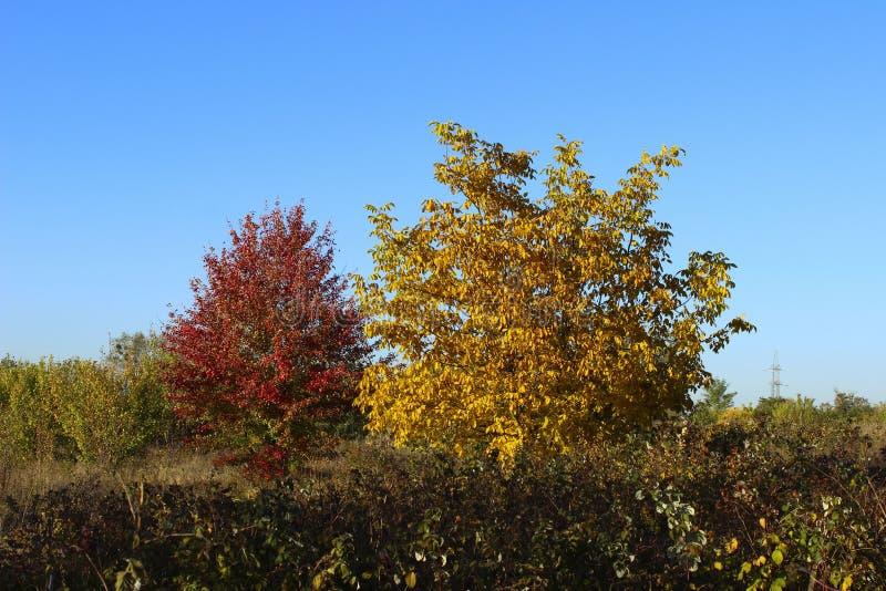 Kleurrijke aard Bebouwd Schot van Autumn Tree stock afbeeldingen