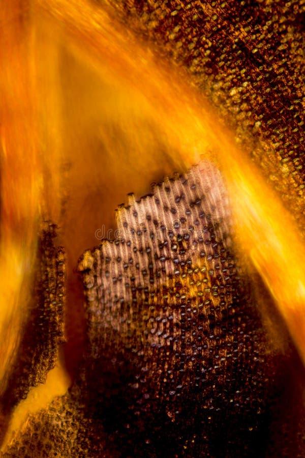 Kleurrijke, abstracte micrograaf van mosbladeren stock afbeelding