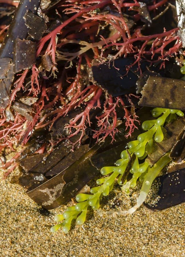Kleurrijke alge stock afbeeldingen