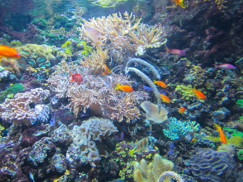 Kleurrijke aquarium, vissen en koralen, overzeese dieren stock foto
