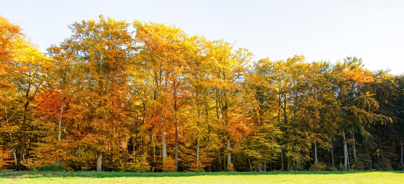Kleurrijke Autumn Forest With Green Meadow In-Voorgrond - Panorama in Sunny Day royalty-vrije stock fotografie