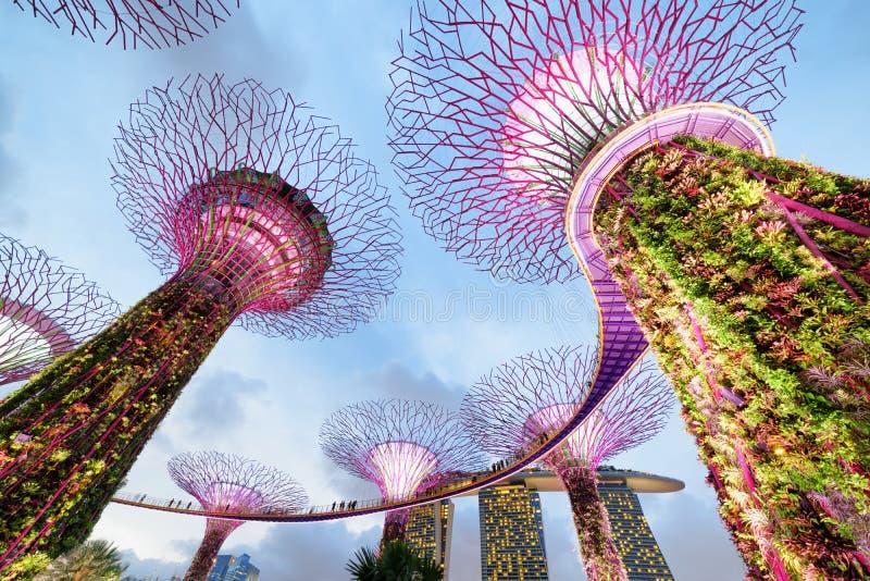 Kleurrijke avondmening van het Supertree-Bosje met Skyway stock foto's
