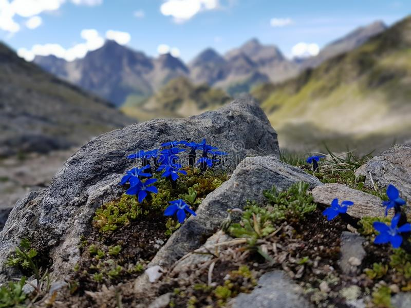 Kleurrijke bergen royalty-vrije stock foto's