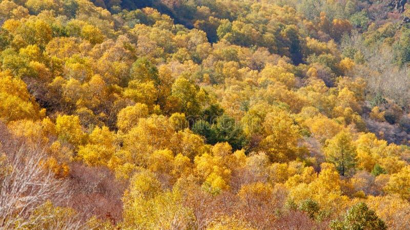 Kleurrijke Berghelling van Baihua Mountainï ¼ Œ Peking stock foto's