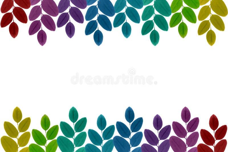 Kleurrijke bladeren stock afbeeldingen