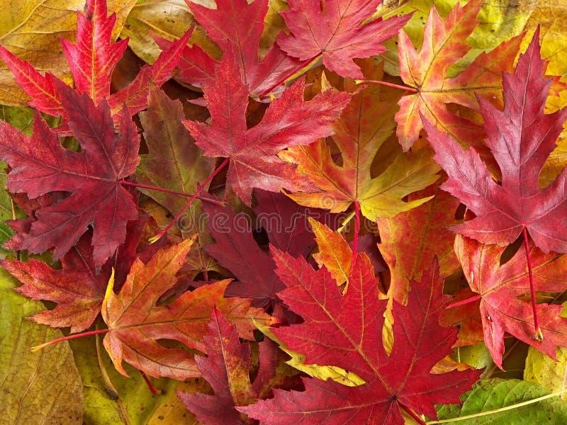 Download Kleurrijke bladeren stock foto. Afbeelding bestaande uit outdoors - 286736