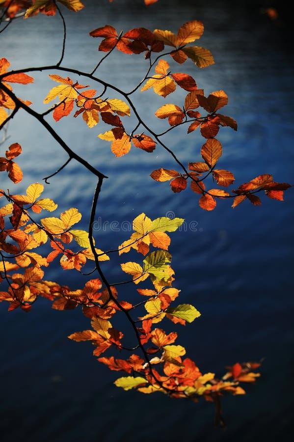 Kleurrijke bladeren in de herfst stock fotografie
