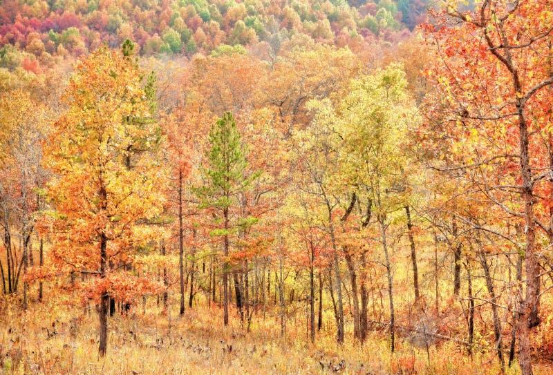 Kleurrijke bladeren in de herfst of daling royalty-vrije stock afbeelding