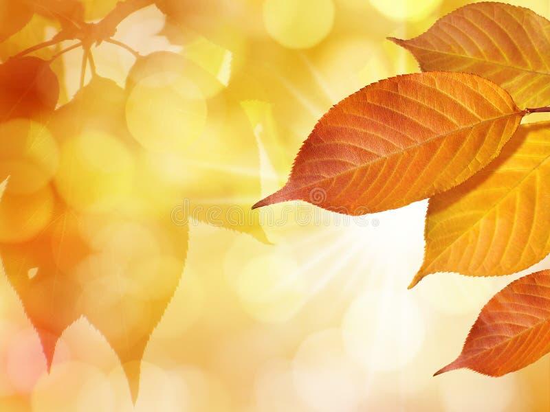 Kleurrijke Bladeren in de Herfst op Gouden Bladerenachtergrond met Zon stock afbeeldingen