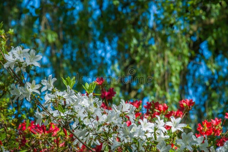Kleurrijke bladeren in Isabella Plantation Suitable voor het maken van achtergrondafbeeldingen stock afbeelding