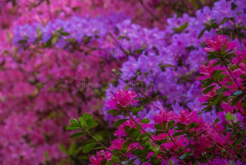 Kleurrijke bladeren in Isabella Plantation Suitable voor het maken van achtergrondafbeeldingen stock foto
