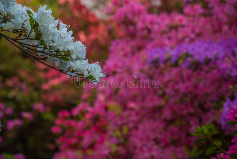 Kleurrijke bladeren in Isabella Plantation Suitable voor het maken van achtergrondafbeeldingen royalty-vrije stock fotografie