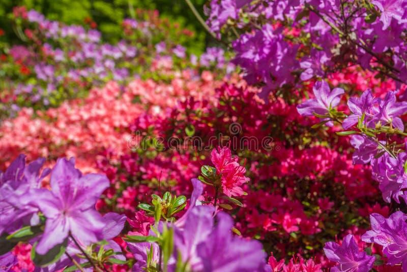 Kleurrijke bladeren in Isabella Plantation Suitable voor het maken van achtergrondafbeeldingen stock afbeeldingen