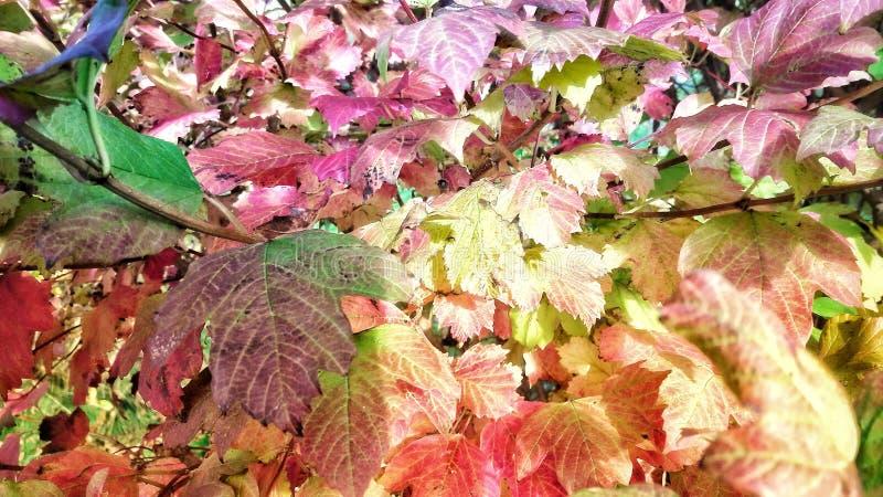 Kleurrijke bladeren op de lentetijd stock afbeelding