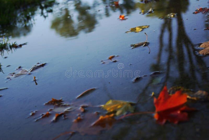 Kleurrijke bladeren op modderige weg stock afbeelding