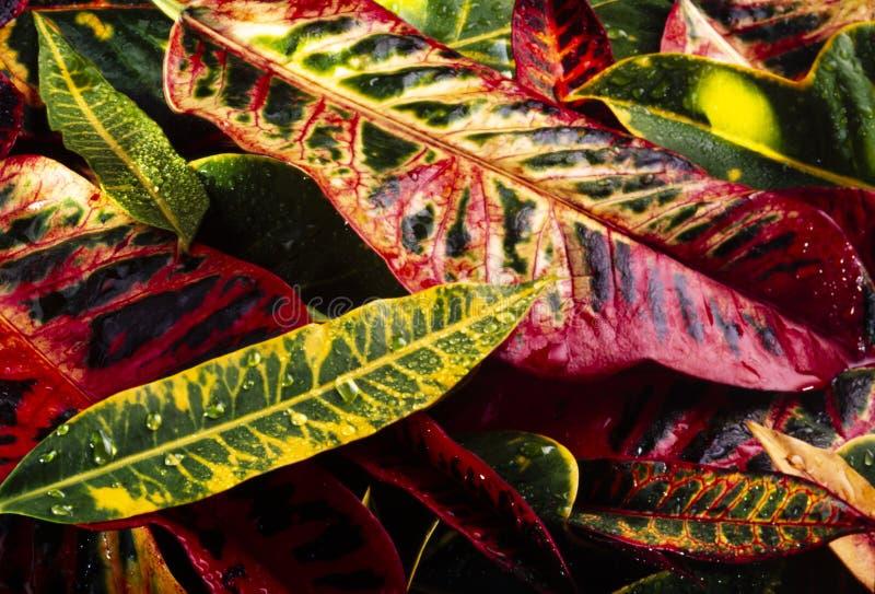 Kleurrijke bladeren van tropische planten royalty-vrije stock fotografie
