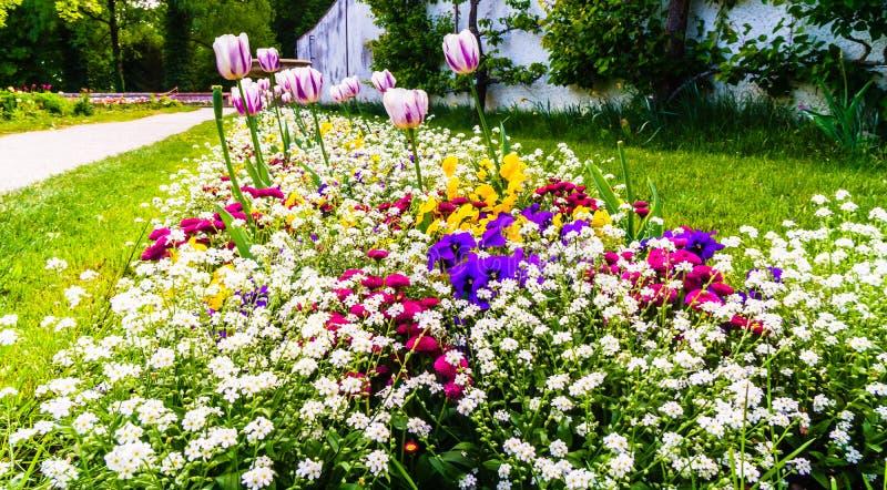 Kleurrijke bloeiende bloem in de lente stock foto's