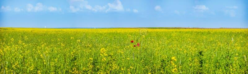 Kleurrijke bloeiende wilde bloemen op de weide in de lentetijd stock foto's