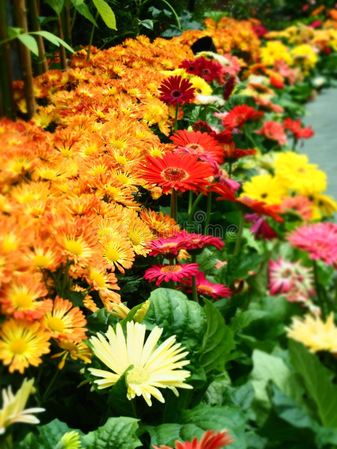 Kleurrijke Bloem royalty-vrije stock foto