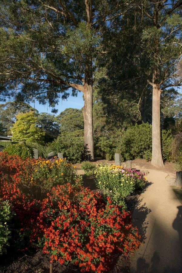Kleurrijke bloem in tuin stock fotografie