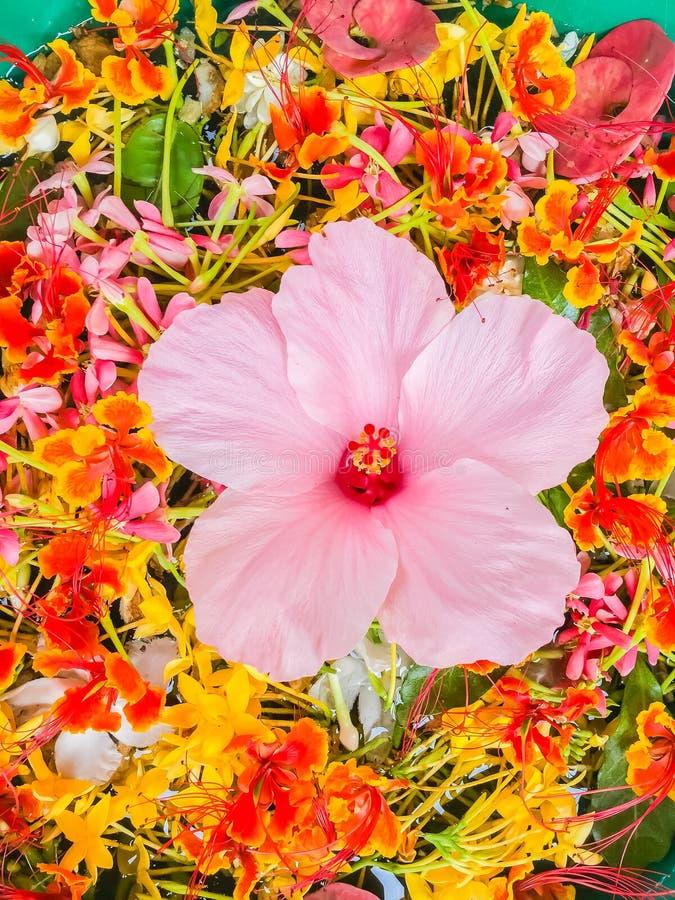 Kleurrijke Bloembloemblaadjes die in de kom voor Songkran-festiva drijven stock foto's