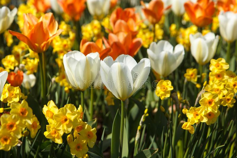 Download Kleurrijke Bloemen In Bloembed Stock Afbeelding - Afbeelding bestaande uit vers, geel: 107703003