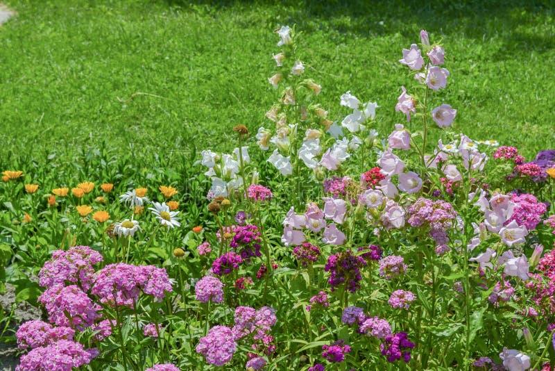 Kleurrijke bloemen in de tuin met groene bladeren en gras op royalty-vrije stock foto
