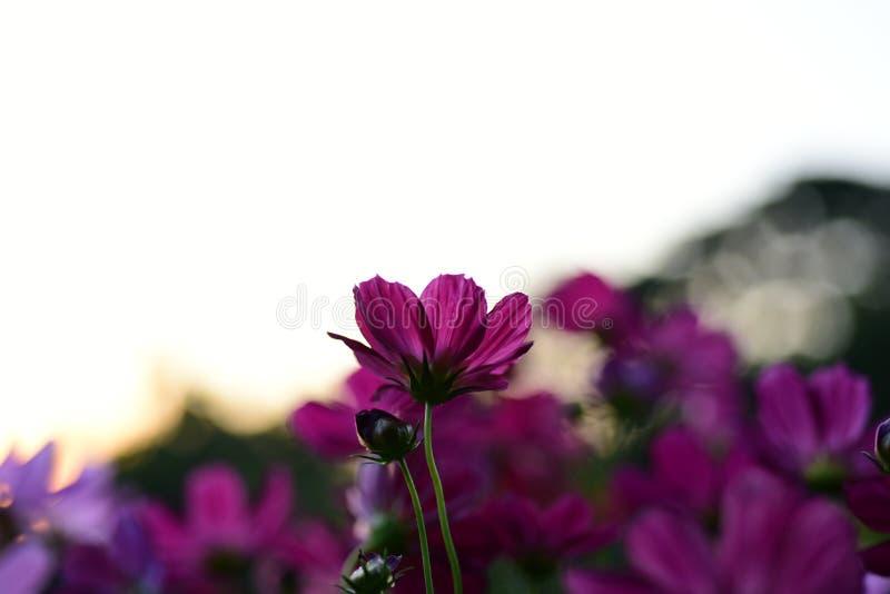 Kleurrijke bloemen in de tuin stock afbeeldingen