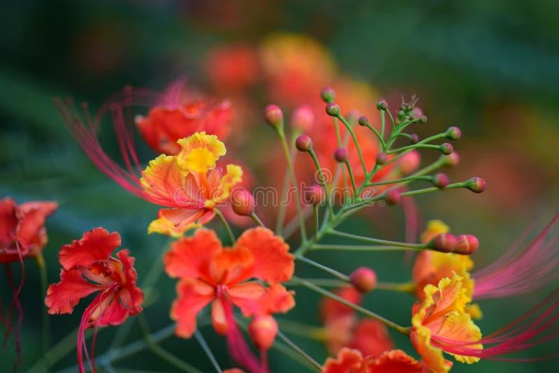 Kleurrijke bloemen in de tuin royalty-vrije stock afbeelding