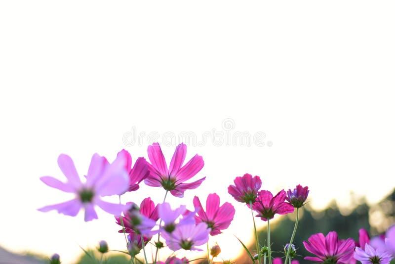 Kleurrijke bloemen in de tuin stock foto