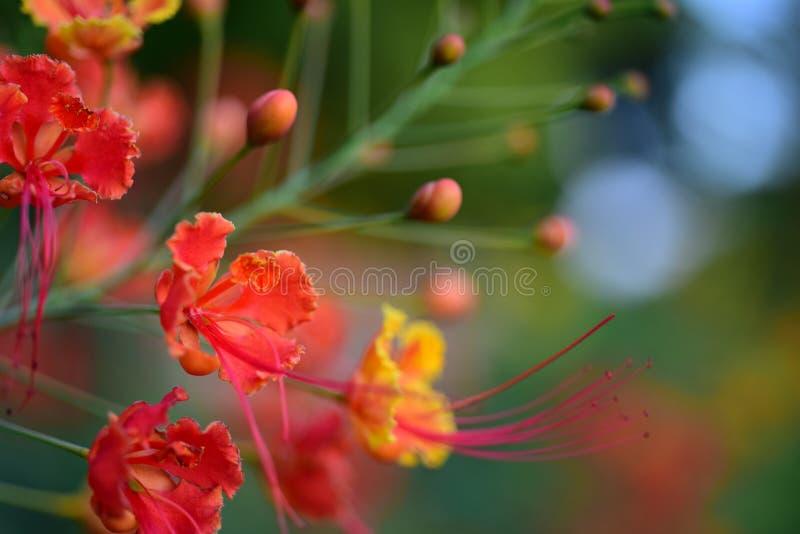 Kleurrijke bloemen in de tuin stock foto's