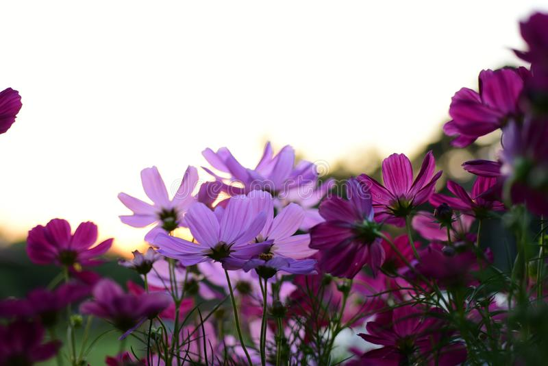 Kleurrijke bloemen in de tuin royalty-vrije stock foto's