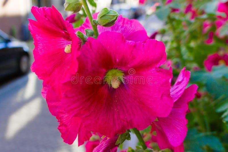 Kleurrijke bloemen die in de de zomerzon bloeien stock foto's