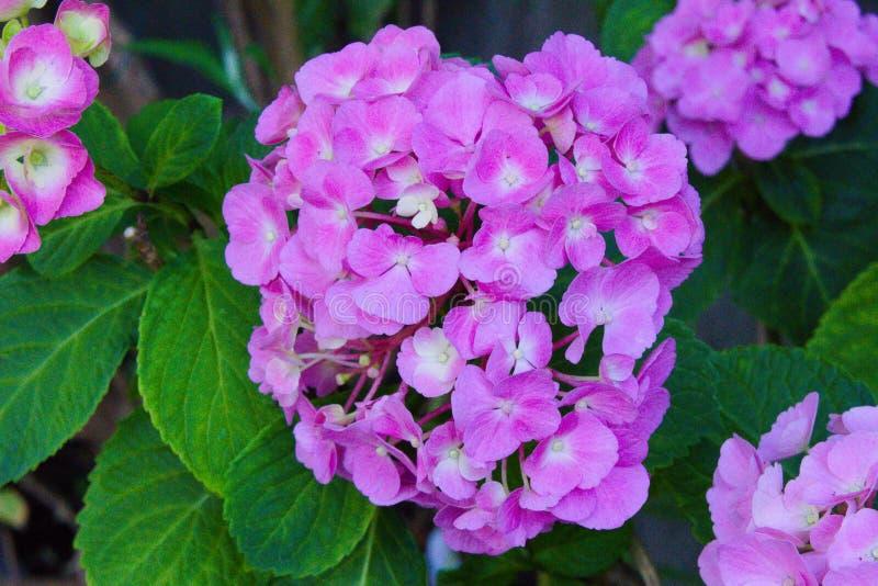 Kleurrijke bloemen die in de de zomerzon bloeien royalty-vrije stock afbeeldingen