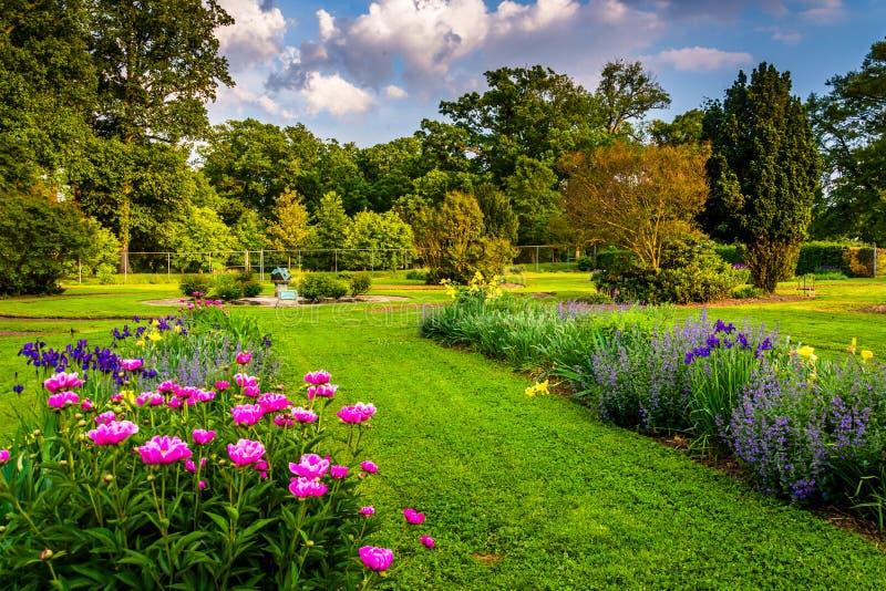 Kleurrijke bloemen in een tuin bij het Park van de Druïdeheuvel, in Baltimore, M royalty-vrije stock afbeeldingen