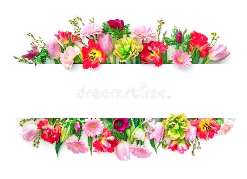 Kleurrijke bloemen geïsoleerd op wit stock afbeeldingen