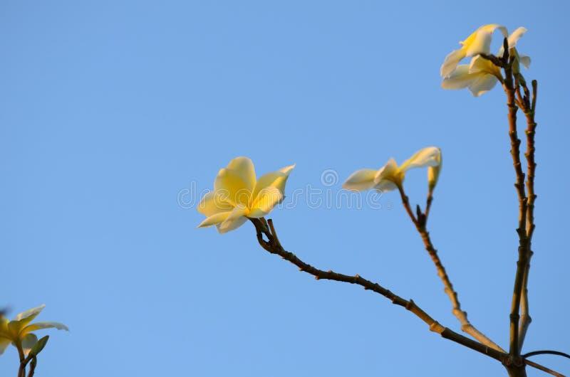 Kleurrijke bloemen Groep bloem groep geel stock foto