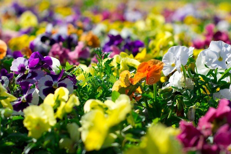 Kleurrijke bloemen in het park royalty-vrije stock fotografie