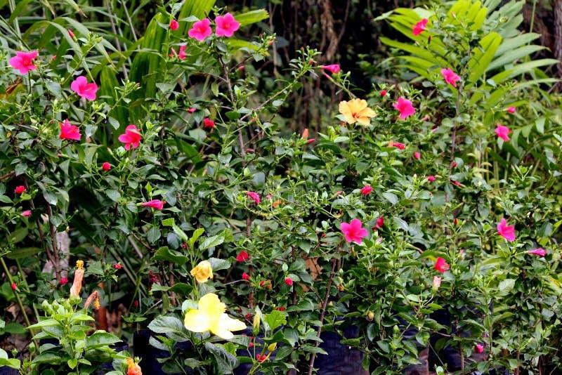 Kleurrijke Bloemen in Indische Botanische Tuinen royalty-vrije stock afbeeldingen