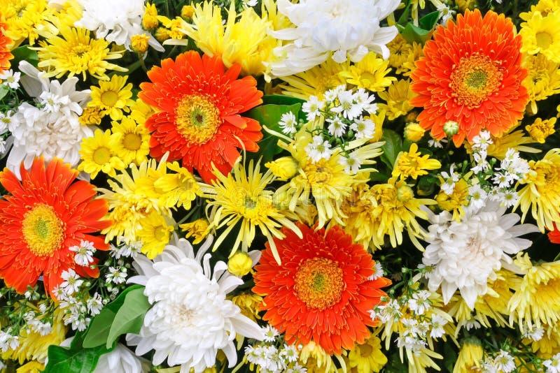 Kleurrijke bloemen in vele kleuren stock afbeeldingen