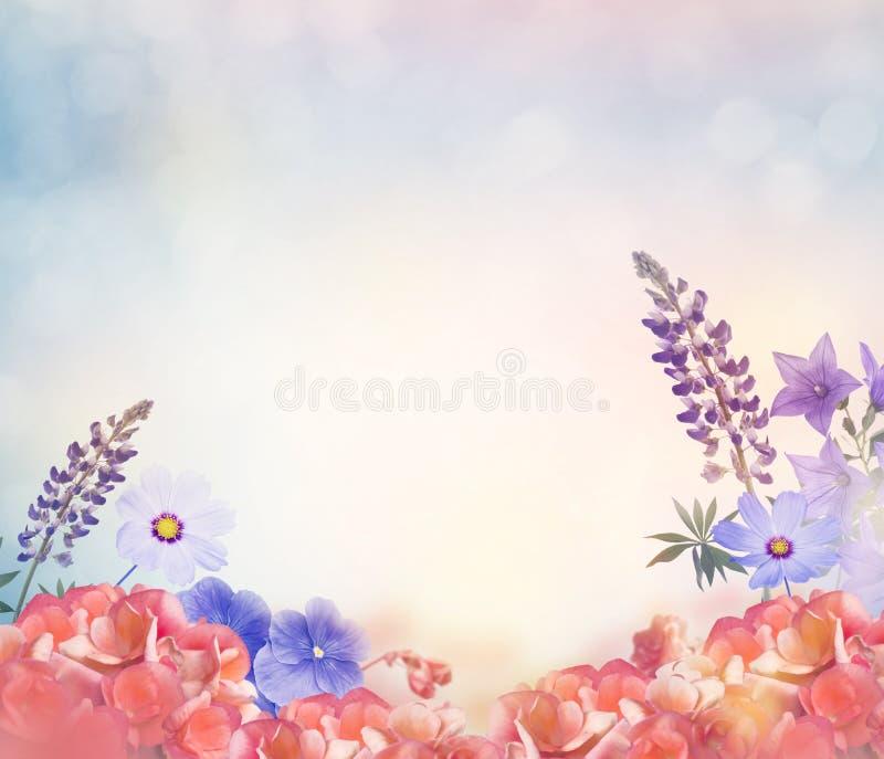 Kleurrijke bloemenbloesem royalty-vrije stock foto's