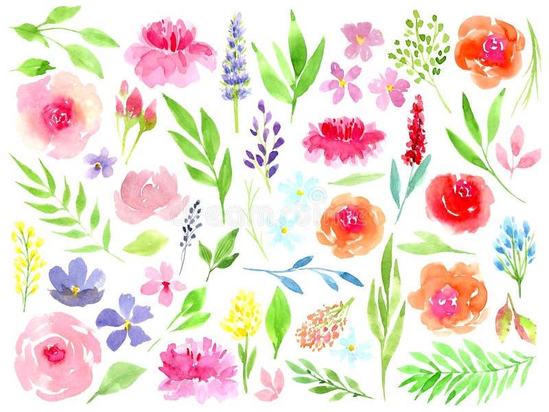 Kleurrijke bloemeninzameling met bladeren en bloemen, die waterverf trekken E stock illustratie