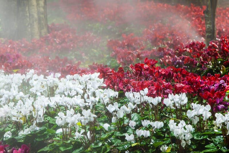 Kleurrijke bloemgebied en wateraanzetsteen bij de nachttuin stock foto