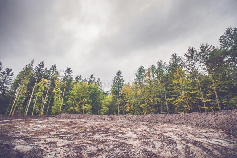 Kleurrijke bomen rond een ontruimd gebied stock afbeeldingen