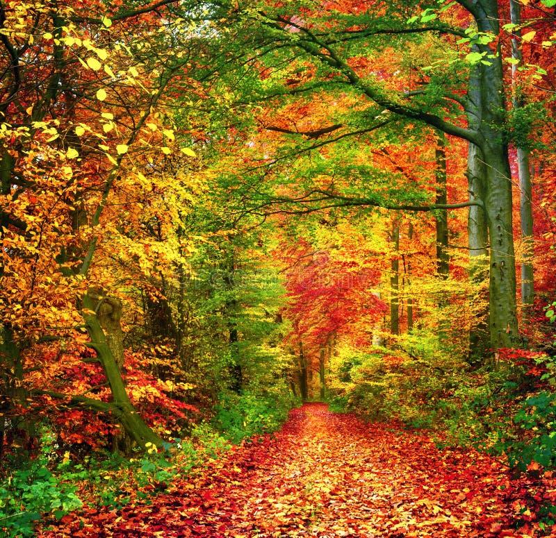 Kleurrijke bosscène in de herfst stock fotografie