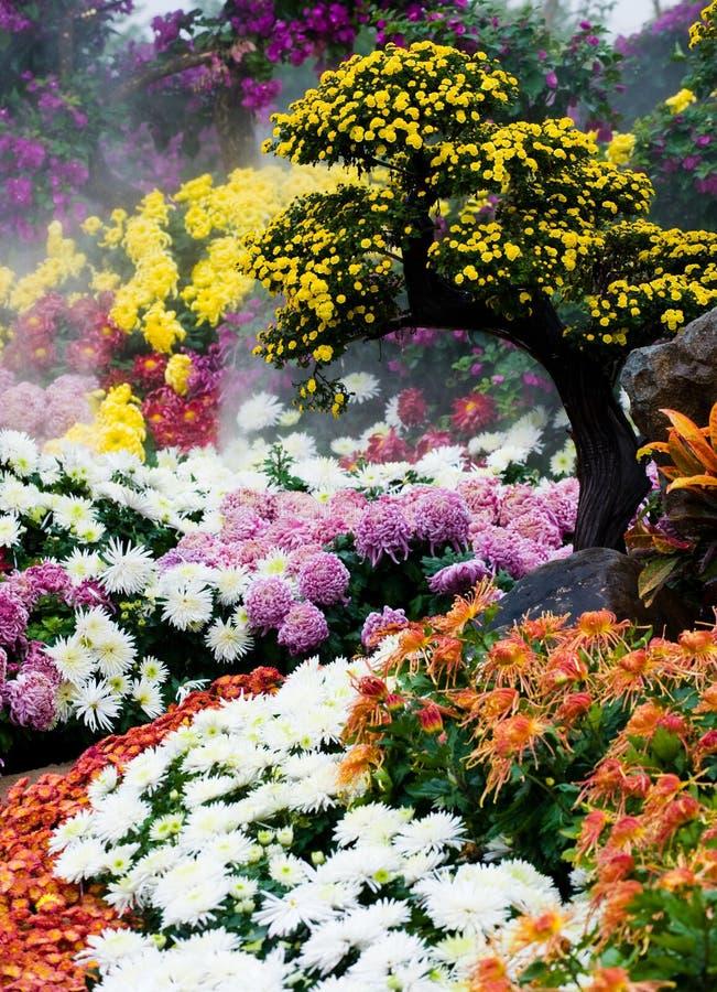 Kleurrijke chrysant royalty-vrije stock afbeelding