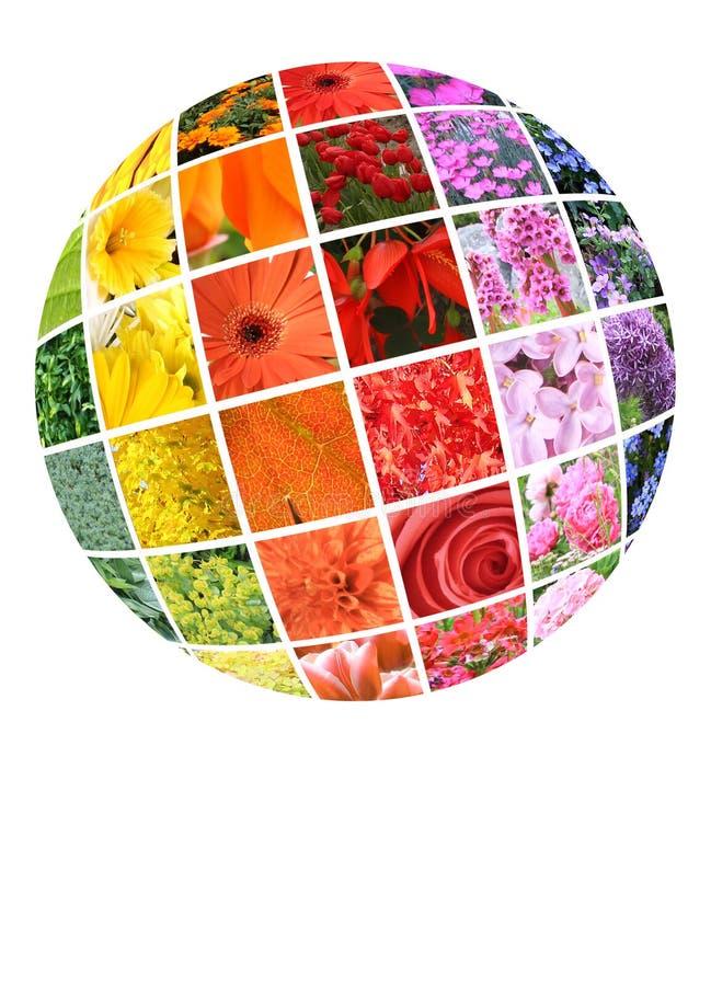 Kleurrijke collage van bloemen stock foto