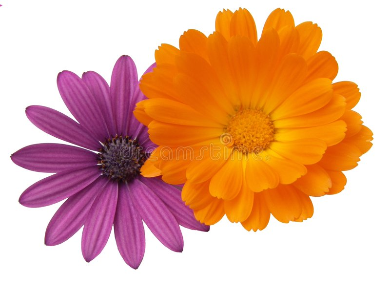 Kleurrijke Combinatie royalty-vrije stock afbeeldingen